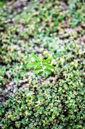 sprout on the ground