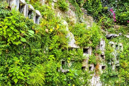 nature wall in Wat Sraket Bangkok Thailand