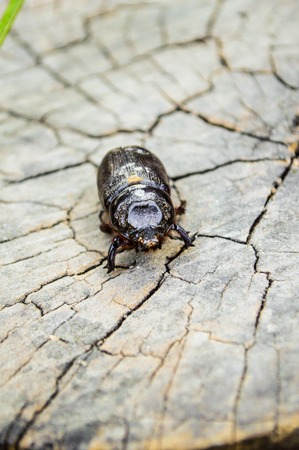 beetle on the wood Stok Fotoğraf