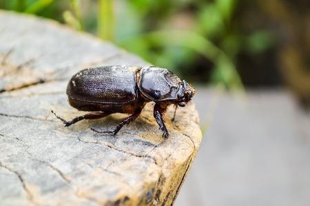 beetle on bark wood
