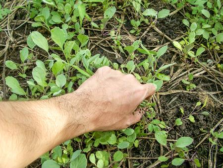 정원에서 풀 잡초를 잡아 당기는 손