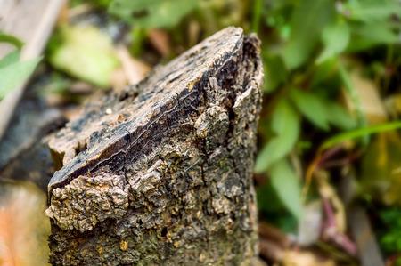 Stump tree Фото со стока - 34410937