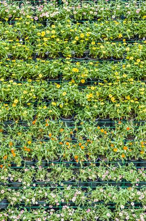 flower wall in garden