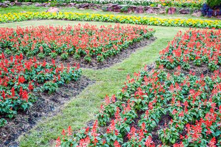 flower garden in bangkok Thailand