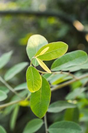 green sprout Reklamní fotografie - 34621232