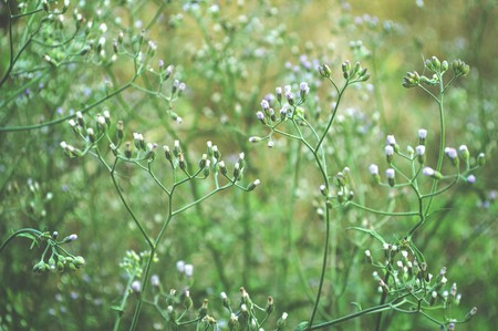 Little ironweed flower in garden