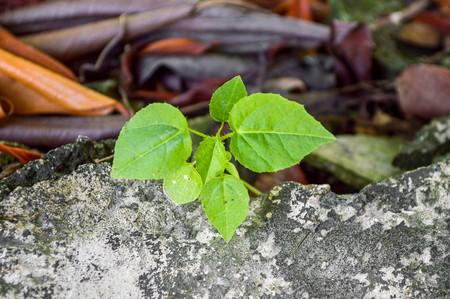 green sprout in garden