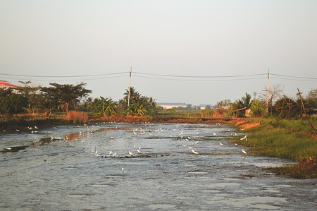 dry fish: dry fish pond in country Thailand