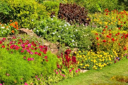 flower garden in Suanluang Rama IX Bangkok Thailand 版權商用圖片