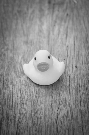 white wood floor: black and white yellow plastic duck doll on wood floor Stock Photo