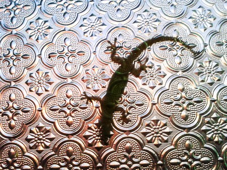 toed: Lizard captured underneath a glass