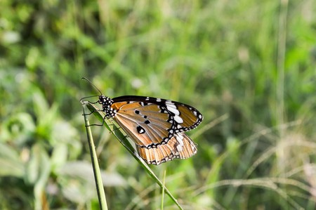butterfly on green grass Stock Photo