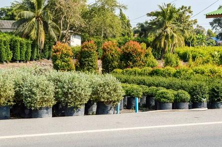 tree garden in waterfront Thailand