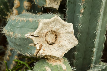trees with thorns: green cactus in garden
