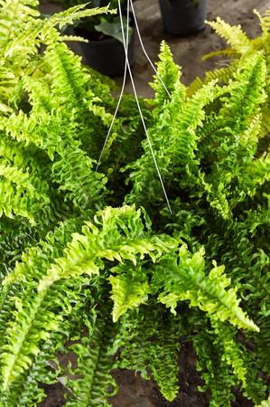 green fern tree in garden photo