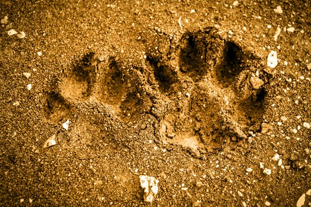 Dog footprint on the ground Stock Photo - 35922288