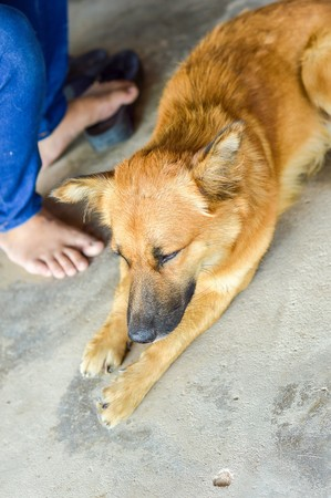 Asia dog Reklamní fotografie