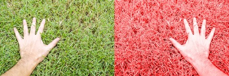 red grass: hand man on green and red grass Stock Photo