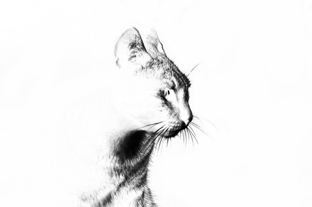 kunst kat illustratie Stockfoto