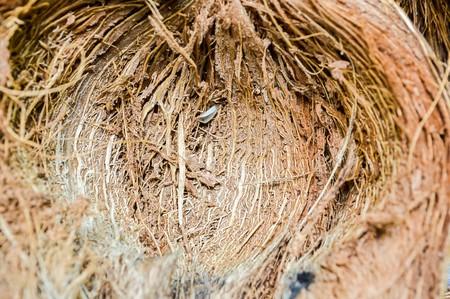 husk: Coco c�scara Foto de archivo