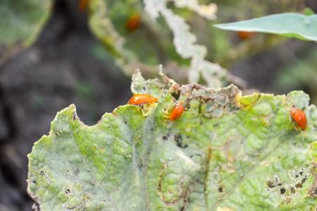 ladybug on green leaves Zdjęcie Seryjne