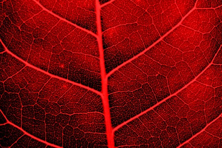 red abstract leaves texture