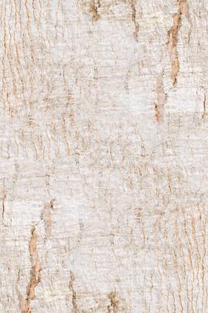 brown bark tree photo