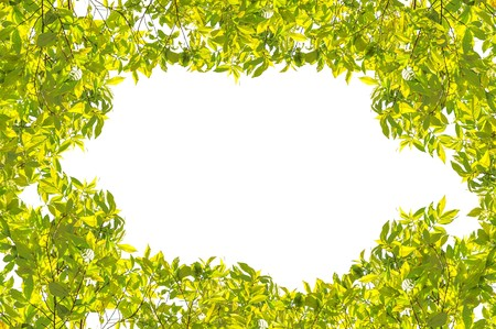 backgroud: green leaves on white backgroud Stock Photo