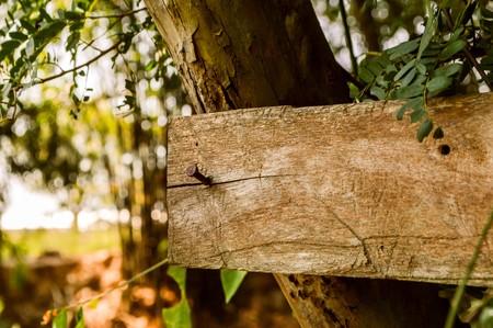 empty wooden label in garden