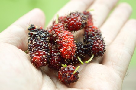 mulberry on male hand