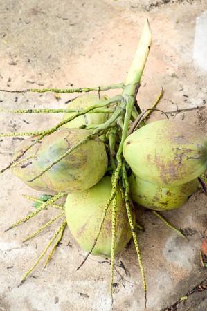 green coconut on cement floor Stock Photo