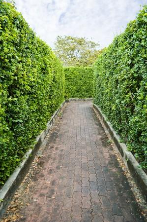 maze garden in Bangkok, Thailand