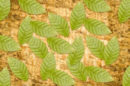 green leaves on grunge bark tree Zdjęcie Seryjne
