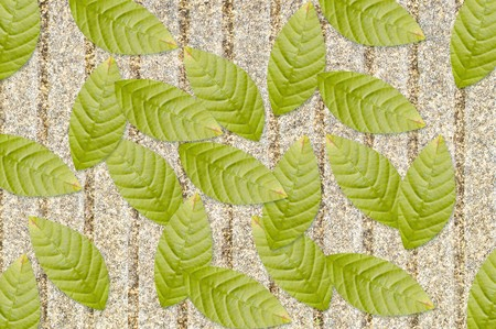green leaves on grunge cement floor