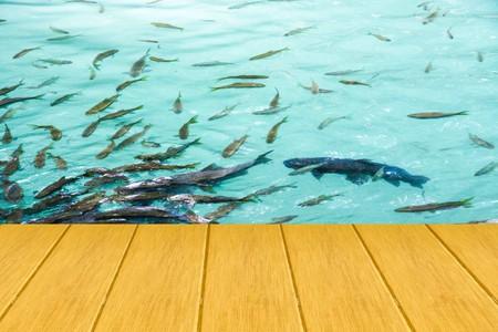 fish pond: wooden bridge on fish pond
