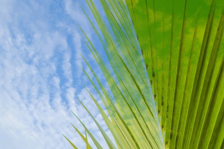 coconut leaves and blue sky abstract texture Stok Fotoğraf
