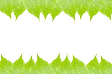 leaves frame: hojas verdes enmarcan aislado Foto de archivo