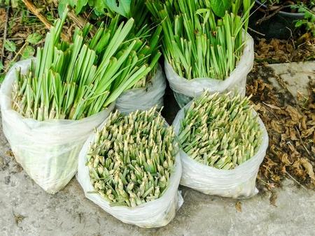 lemongrass: Lemongrass tree in plastic bag