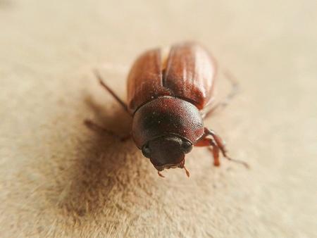 tiny: Tiny insect Stock Photo