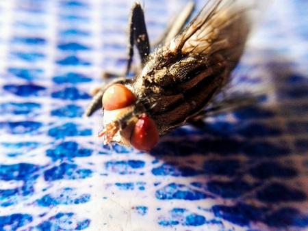 eye: Tiny fly
