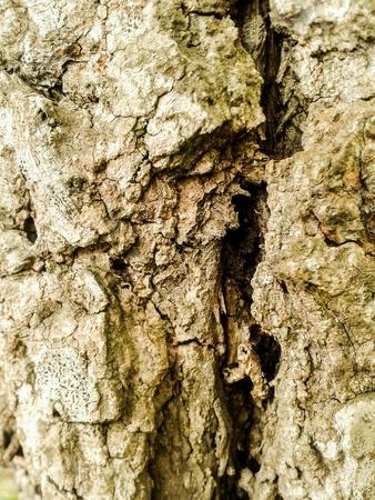 crack: Crack bark tree texture