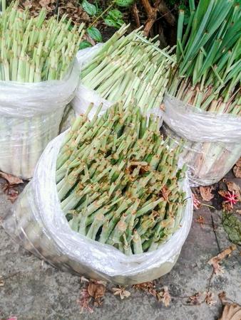 lemon grass: Green lemon grass in garden Stock Photo