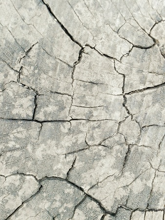rough: bark tree texture