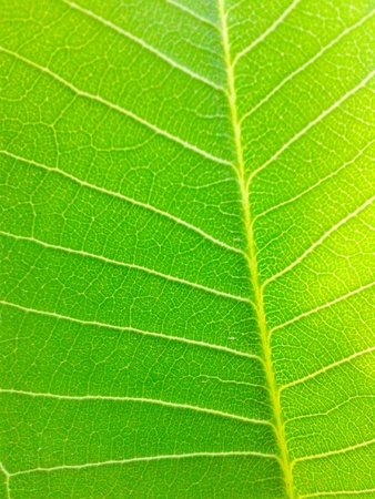 surface: Green leaves texture Stock Photo