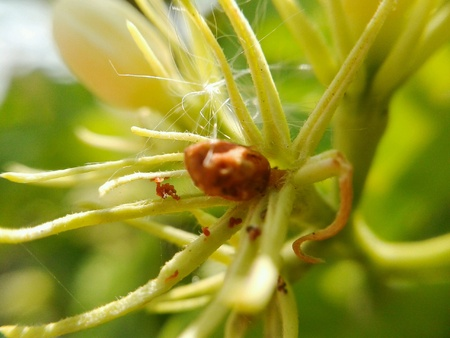 detail: Dry bud flower