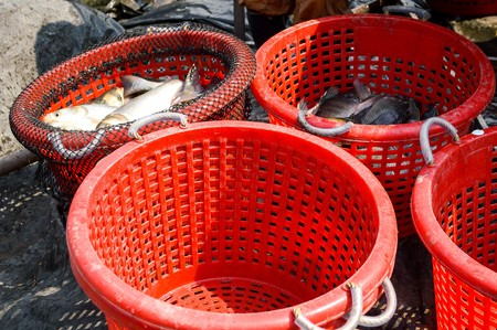 fishery: fish in red basket in fishery country Thailand