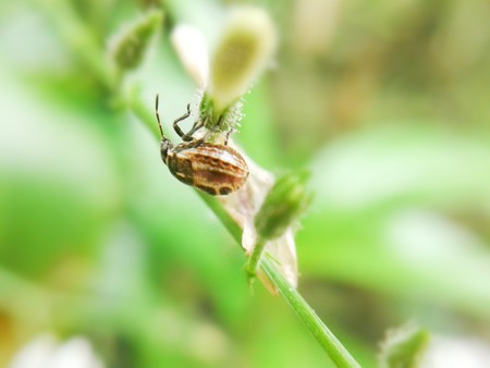 bug  macro