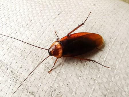 Kakkerlak Stockfoto - 40183140