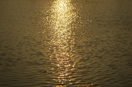 wavelet: water surface in sunset