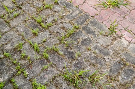 weed block: cement brick floor in country garden Stock Photo